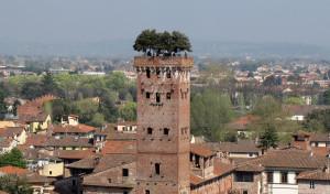Torre Guinigi em Lucca